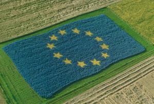 seminte pentru proiecte cu finantare europeana